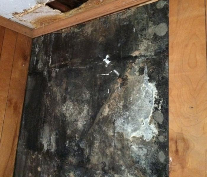 Mold Growing After Hurricane Katrina